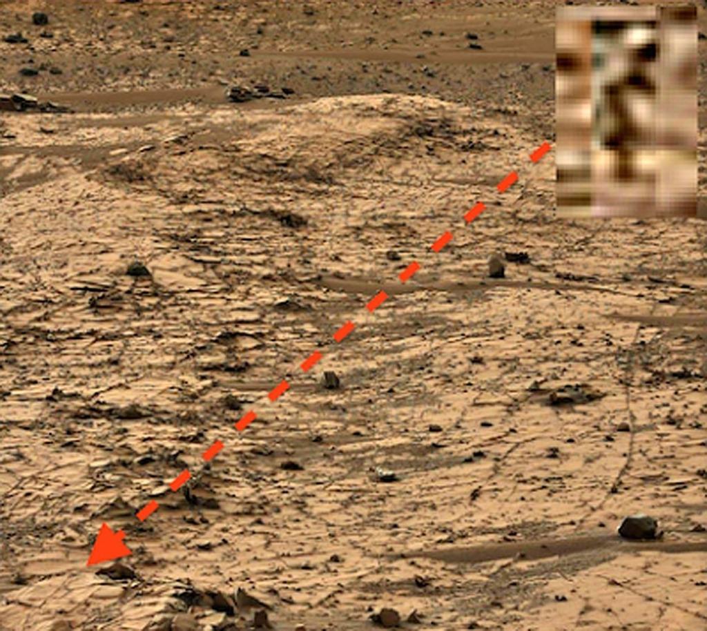 Животноводство на Марсе